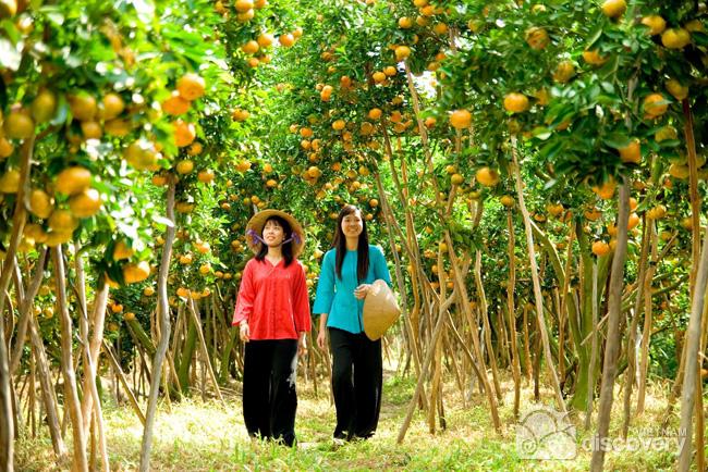 Abundant fruit orchards in Mekong region - Mekong day trip