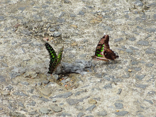 Butterfly in Cat Tien National Park Day trip from Ho Chi Minh City