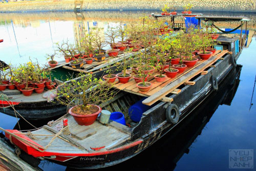 HCMC-Binh-Dong-flower-floating-market-Ho-Chi-Minh-City-4