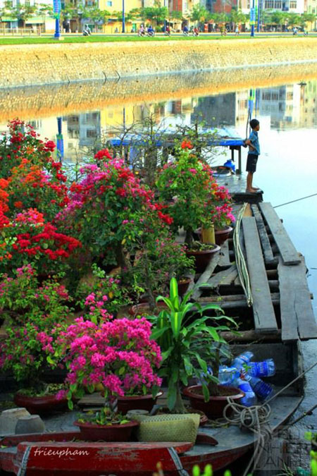 HCMC-Binh-Dong-flower-floating-market-Ho-Chi-Minh-City-5