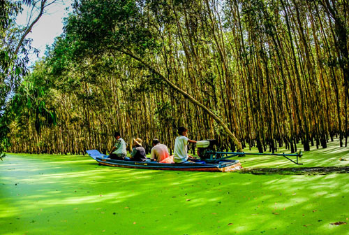 HCMC-Visiting-Tra-Su-Forest-Guide-to-travel-Southwest-Vietnam-in-flooding-season